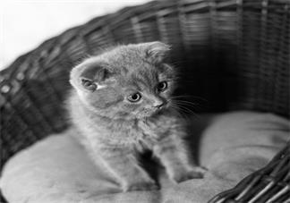 学龄前宝宝睡前故事 猫伯爵