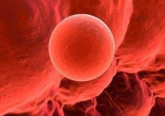 排卵期内精子进入体内会有什么感觉 精子进入体内能感觉的到吗