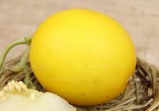 伊丽莎白瓜是什么  孕妇能吃伊丽莎白瓜吗