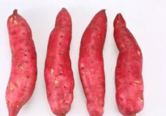 产妇适合吃紫薯还是番薯 孕妇吃紫薯番薯有什么好处