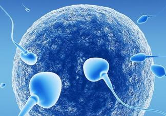 男性的精子能在女性体内存活多久 精子和卵子需要多长时间结合