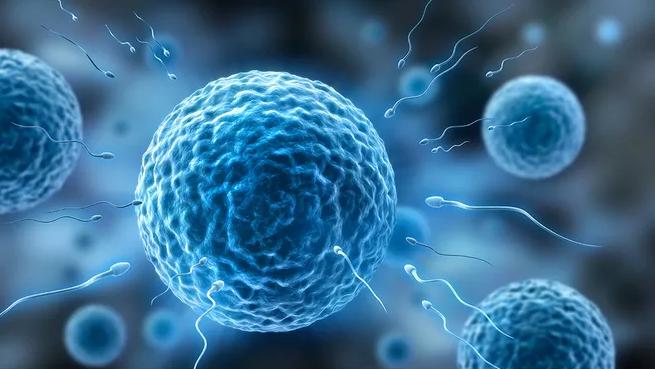 备孕吃哪些食物有注意排卵 B超监测排卵什么时候最准确