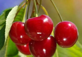 孕妇吃樱桃能补血吗 孕妇吃樱桃好吗
