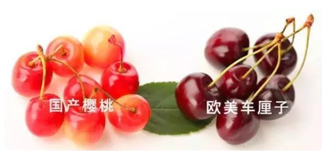 孩子吃车厘子好不好 孩子吃樱桃和车厘子的营养是一样的吗