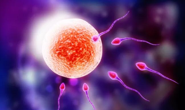 卵泡要越大越好吗 卵泡过大会影响怀孕吗