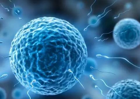 男性精子活力低有哪些表现 精子活力低能怀孕吗