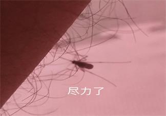 【被蚊子咬了心情的配图】被蚊子咬了心情感慨 蚊子咬了怎么幽默表达