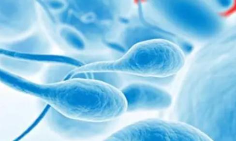 男性第一次检查生育步骤 男性不育检查项目流程