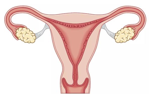 子宫内膜异位症和遗传有关吗 子宫内膜异位症能做试管婴儿吗