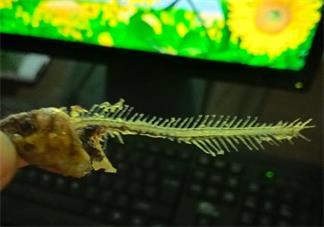 鱼骨头属于什么垃圾 鱼骨头是干垃圾还是湿垃圾