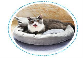 猫咪用的东西怎么区分干湿垃圾 猫猫用的东西是干垃圾还是湿垃圾