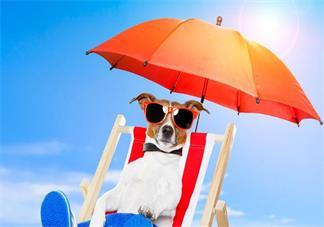 晒太阳有什么好处 适当的晒太阳可以补充维生素d吗