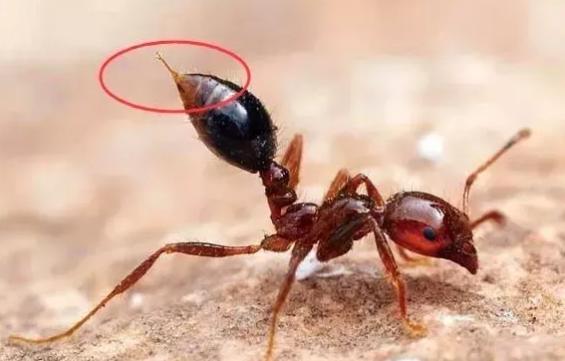 [孩子被蚂蚁咬了肿很大怎么办]孩子被蚂蚁咬了肿很大怎么办 被蚂蚁咬后怎么消肿