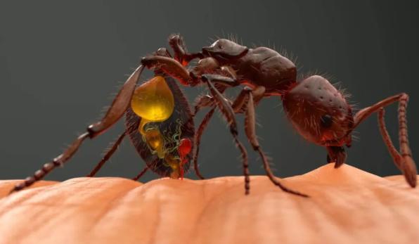 [孩子被蚂蚁咬了肿很大怎么办]孩子被蚂蚁咬了肿很大可以刺破吗 蚂蚁咬了多久好