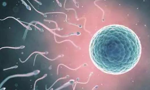 男性少精症备孕吃什么好 男性少精症的症状有哪些