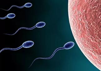 怎么看男子精子健不健康 男人吃什么可以补精子