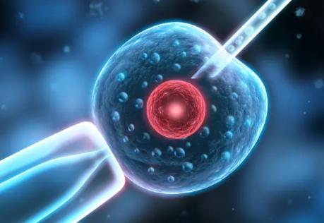 试管婴儿促排卵越多越好吗 试管促排卵卵泡是不是越多越好  试管婴儿促排卵越多越好吗  试管过程中发现,许多患者总希望取到尽可能多的卵子,甚至在促排阶段相互攀比卵泡数目。其实完全没有必要,过多的卵泡数量