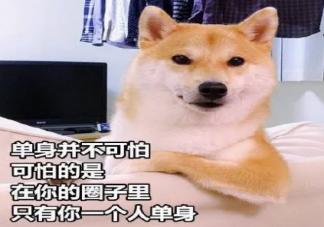 七夕吃狗粮的心情说说 七夕吃 狗粮搞笑说说图片