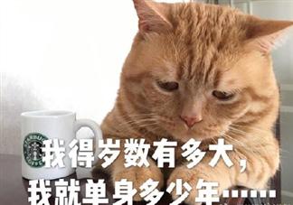 七夕一个人过情人节的说说 七夕一个人的朋友圈句子