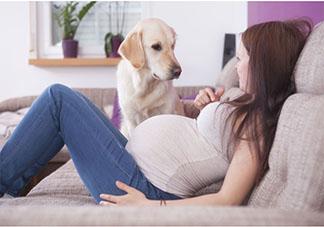 备孕期间就得送走宠物吗 妊娠和宠物真的不能共存吗