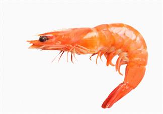 人造虾什么时候上市 人造虾和真虾有什么不一样