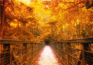 秋季备孕有什么好处 秋季为什么适合备孕