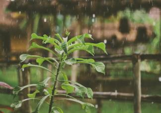 描写秋雨的诗句有哪些 关于秋雨的诗句大全