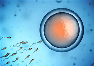 精子和卵子结合要多长时间 精子和卵子是如何相遇结合