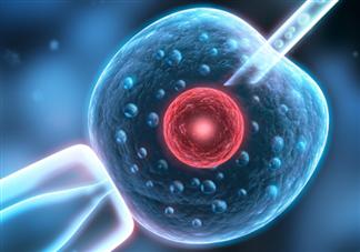 供卵试管婴儿和普通试管婴儿有什么不同 供卵试管婴儿和普通试管婴儿的区别