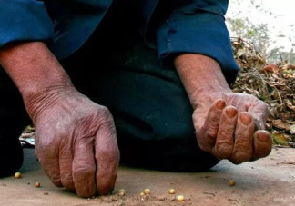 世界粮食日手抄报大全 世界粮食日手抄报模板图片