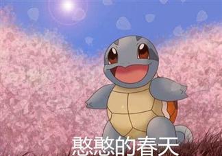 杰尼龟表情包为什么这么火 杰尼龟表情包合集