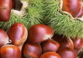 秋季吃板栗有什么好处 秋季吃板栗对肾脏好吗
