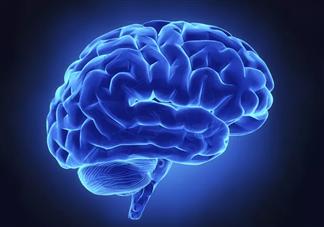 对大脑有害的七种食品 吃什么有助于大脑健康