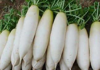 冬吃萝卜有什么好处 萝卜有什么营养功效
