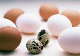 鸡蛋和鹌鹑蛋哪个营养更高 鸡蛋和鹌鹑蛋哪个更适合孩子吃