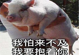 吃不起猪肉的朋友圈心情说说配图 猪肉太贵吃不起的心酸句子