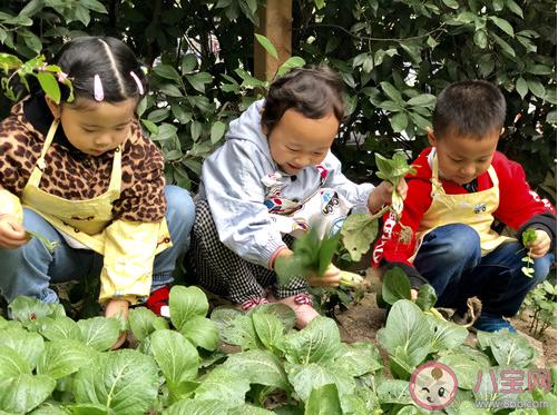 2019幼儿园立冬主题活动报道稿四篇 幼儿园立冬活动报道美篇