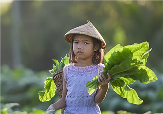 劳动教育对宝宝有什么好处 怎么开展劳动教育