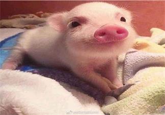 2万月薪招聘名校学生养猪是怎么回事 什么学校招聘学生养猪