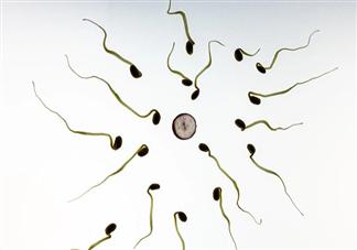 男性一次射出精液是越多越好吗 男性一次射精量多少才是正常