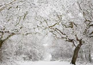 2019下雪了适合下雪天发的唯美说说 下雪了真好心情短语