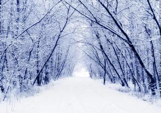 冬季怕冷吃什么食物好 冬季饮食调理