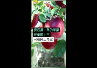 保质期一年的苹果怎么回事 苹果保质期一年不会坏吗