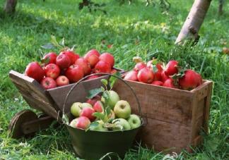 2019平安夜吃苹果的心情说说 平安夜晒苹果的微信句子