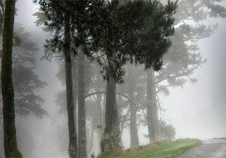 适合大雾天发的优美文案说说 大雾天朋友圈美文句子分享