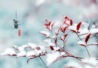 大寒节气是一年中最冷的时候吗 大寒节吃什么传统食物