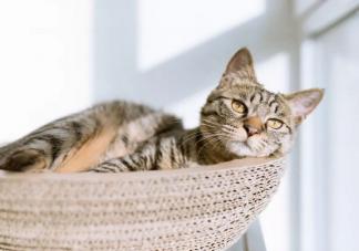 留守宠物如何过年 宠物自己待着会有什么影响吗
