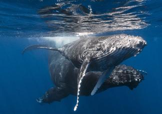 抖音托鲸是什么意思什么梗 抖音托鲸的梗出处是什么