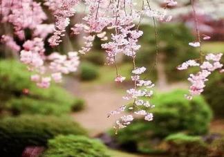 2020三月第一天心情说说 三月唯美祝福语大全