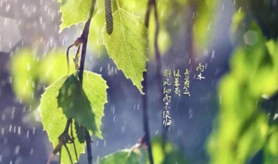 雨水之后怎么养生 雨水后的养生方法